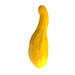 Courgettes tempest